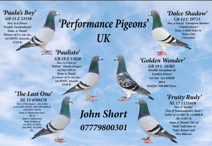 About Performance Pigeons UK