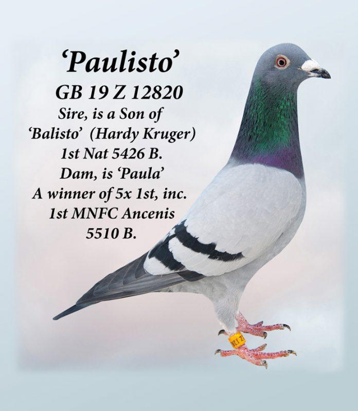 paulisto-gb19z12820