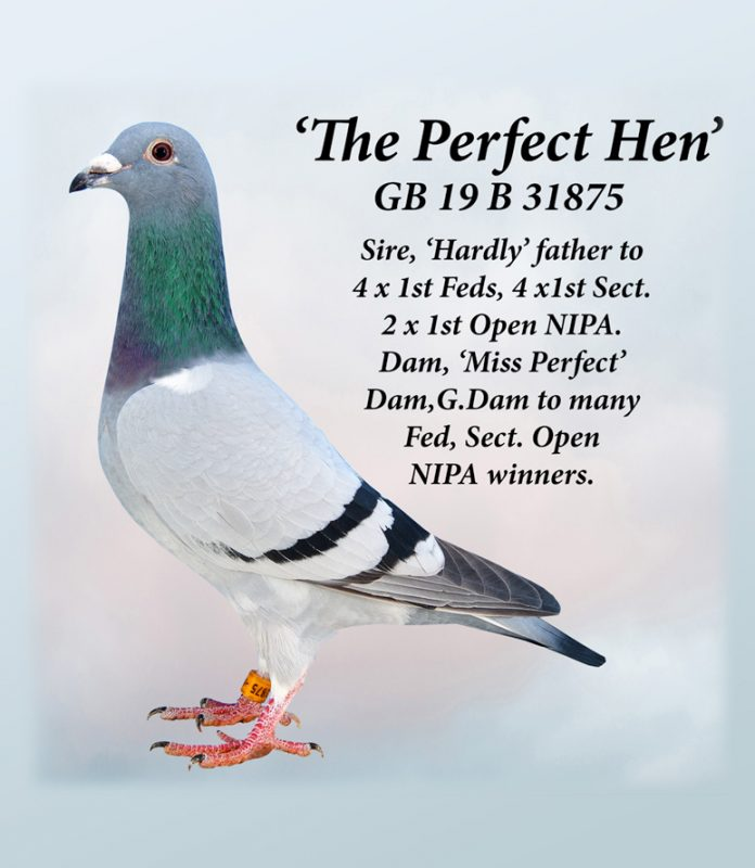 the-perfect-hen-gb19b31875