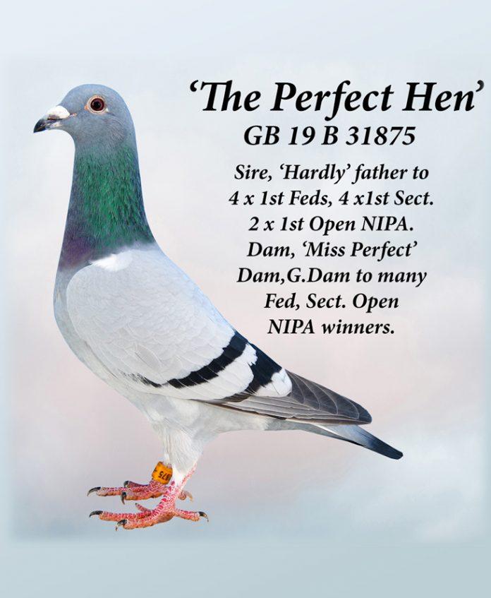 the-perfect-hen-gb19b31875